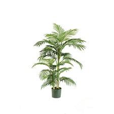 Cane Palm Pot Plant (Set of 2)