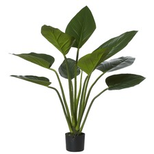 Green Kingdom Plant (Set of 2)