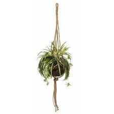 Spider Plant Como Hanging Pot