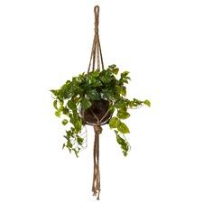 Syngonium Como Hanging Pot