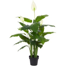 Faux Spathiphyllum Plant (Set of 2)