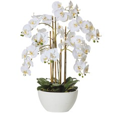 70cm Faux Butterfly Orchid & Round Pot