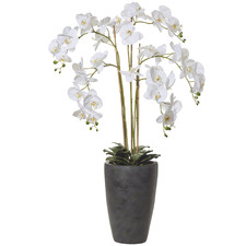 120cm Tall Potted Faux Butterfly Orchid