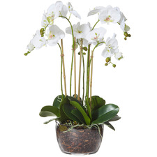 Faux Moth Orchid with Classic Bowl