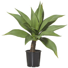 Giant Potted Faux Agave Plant