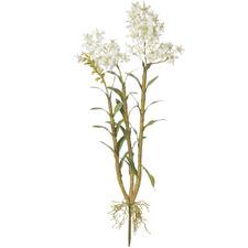 104cm White Faux Oncidium Orchid Plants (Set of 2)