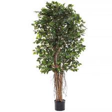 Potted Faux Ficus Retusa Tree