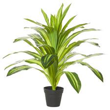 60cm Potted Faux Dracaena Plant