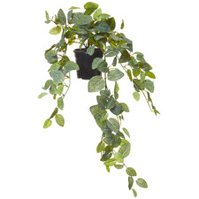 70cm Potted Faux Hanging Fittonia Bush