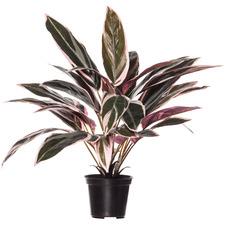 45cm Potted Faux Cordyline Plant
