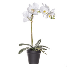 44cm Potted Faux Butterfly Orchid Plant