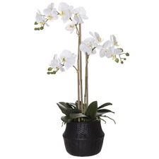 66cm Faux Butterfly Orchid Plant with Basket Pot