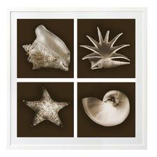 Love Shells Printed Wall Art
