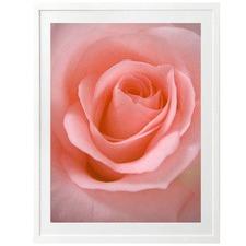 Blushing Rose Printed Wall Art