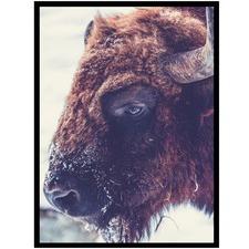 Buffalo Bruce Canvas Wall Art