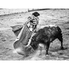 Matador Canvas Wall Art