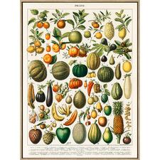 1898 Fruit Illustration Framed Canvas Wall Art