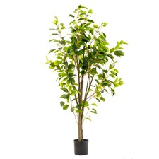 120cm Potted Ficus Tree