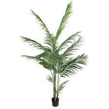 180cm Potted Areca Palm