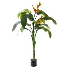 160cm Heliconia Plant with Flower