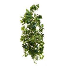 110cm Coated Cissus Bush