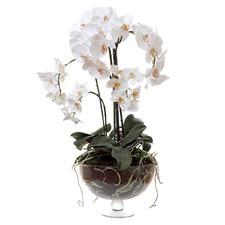 70cm Phalaenopsis In Glass Vase