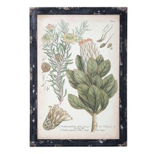 Botanical Cape Protea Framed Print