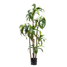 150cm Faux Dracaena Fragrans with 8 Heads