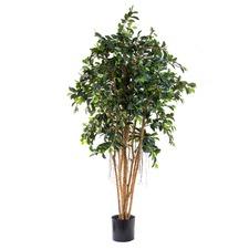 180cm Faux Ficus Retusa