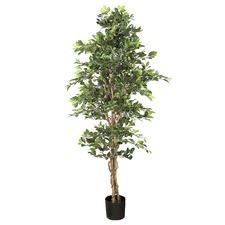 180cm Faux Ficus Retusa Bush Tree