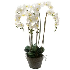 95cm White Faux Orchid with Terracotta Pot