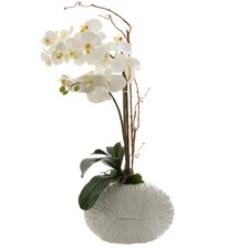 70cm White Faux Phalaenopsis with Shell Vase