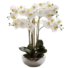 Real Touch Phalaenopsis with Pot