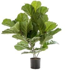 Potted Faux Fiddle Leaf Plant