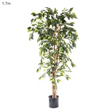 170cm Artificial Ficus Tree
