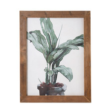 Banana Palm Framed Print Wall Art