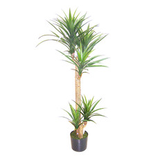 Potted Faux Yucca Head Tree