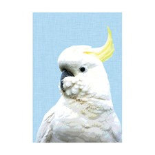 Sulphur Crested Cocky Modern Printed Wall Art