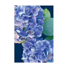 Hydrangeas Modern Printed Wall Art