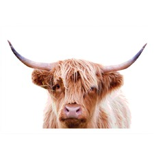 Highland Cow 3 Printed Wall Art