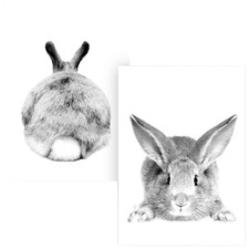 Set of 2 Mr Cottontail Unframed Paper Prints