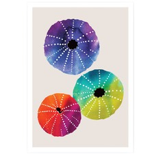 Sea Urchins Unframed Paper Print