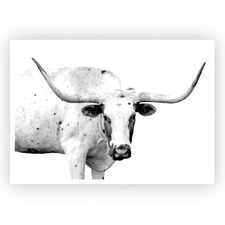 Texas Longhorn Unframed Paper Print