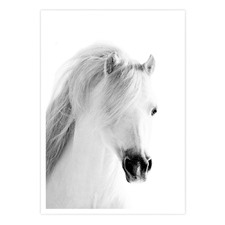 The White Horse Printed Wall Art