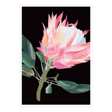 Black King Protea Printed Wall Art