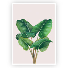 Alocasia Printed Wall Art