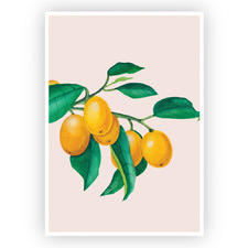 Cumquats Printed Wall Art