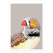 Zebra Finch Printed Wall Art