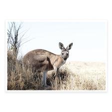 Eastern Grey Kangaroo Printed Wall Art