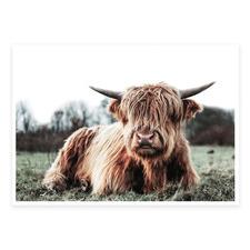 Scottish Highland Cow Printed Wall Art